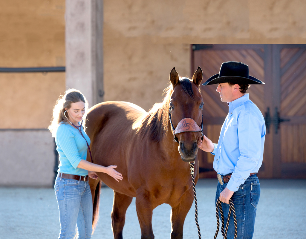 How to Find the Right Supplement for Your Horse's Needs