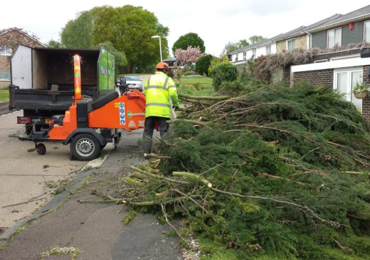 How Tree Surgeons Help In Keeping Your Garden In A Healthy Condition