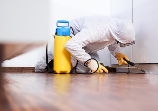 4 Benefits Of Pest Control And Management Services