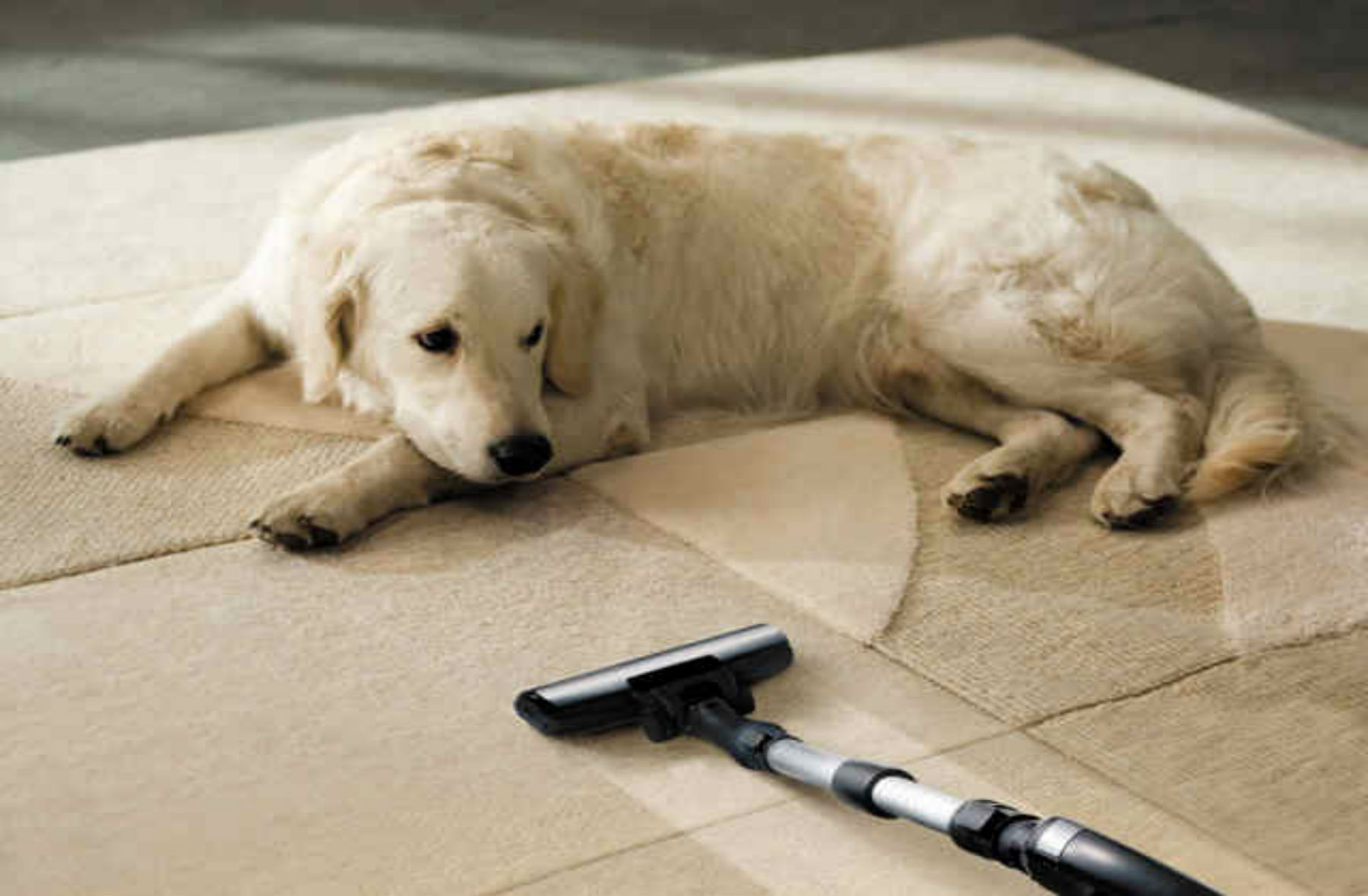 Can Pet Odor Be Removed Permanently From House?