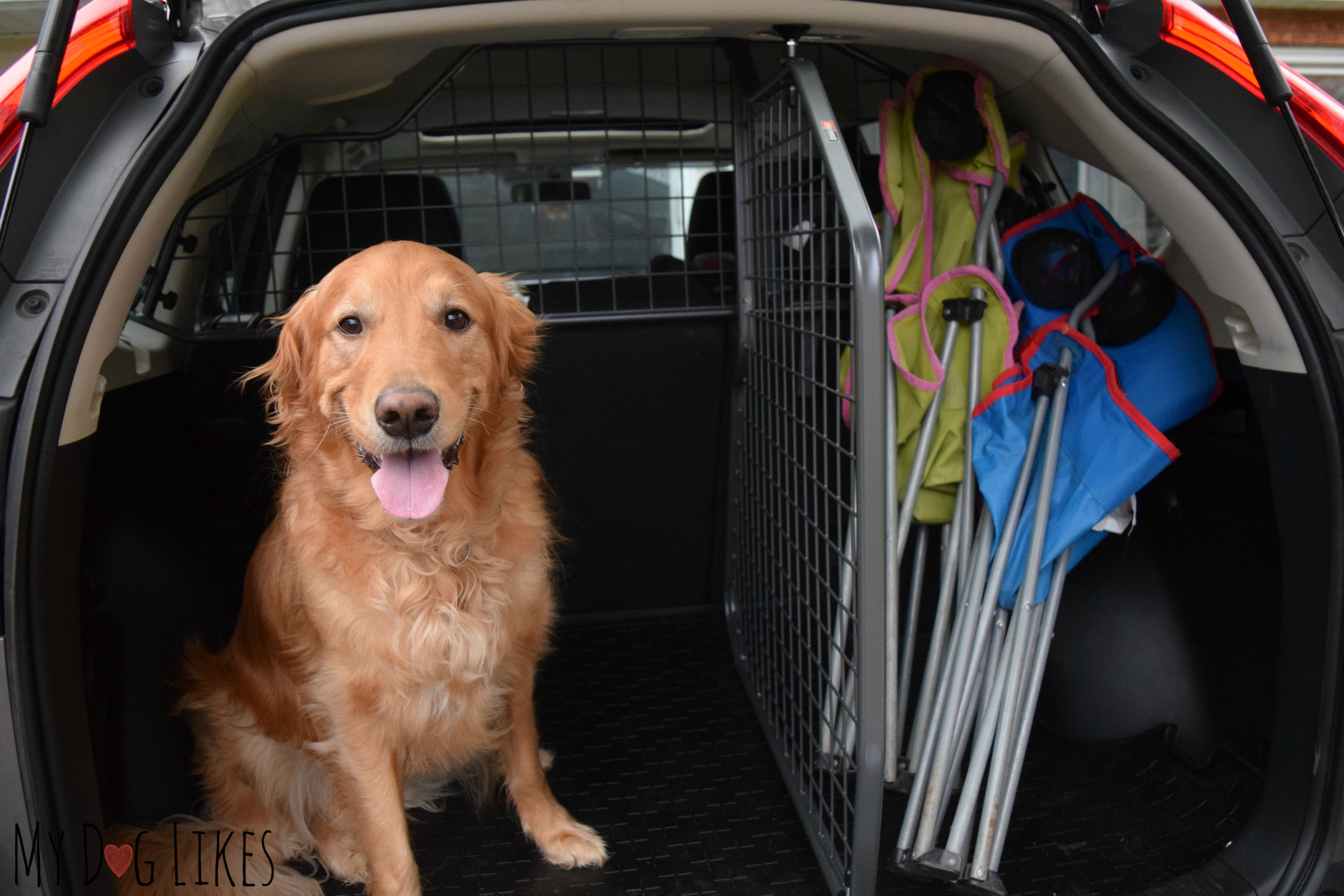 What To Bear In Mind When Shipping Pets Across The Borders?