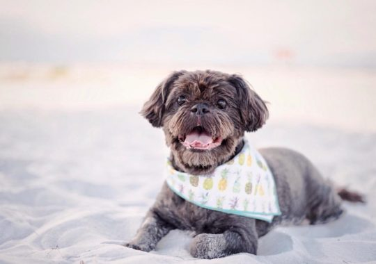 Why Should You Hire Professional Photographers For Pet Photography?
